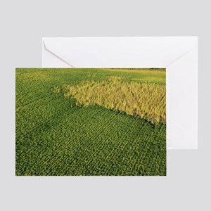 """Green & Gold"" Greeting Card"