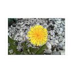 Dandelion 38.5 x 24.5 Wall Peel