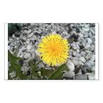 Dandelion Sticker (Rectangle 50 pk)