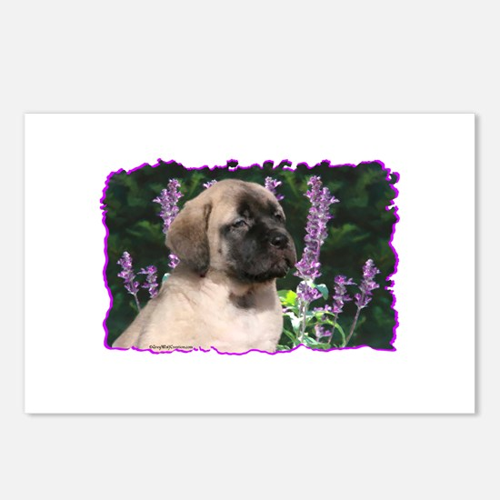 Mastiff 180 Postcards (Package of 8)