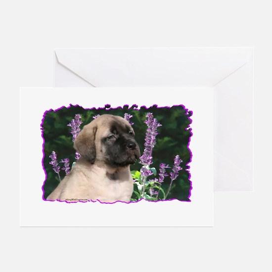 Mastiff 180 Greeting Cards (Pk of 10)