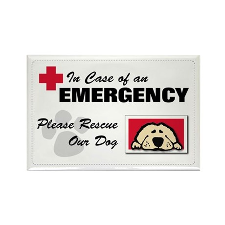 Please Rescue Dog Rectangle Magnet (10 pack)