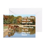 New Forest ponies greeting cards (pk of 20)