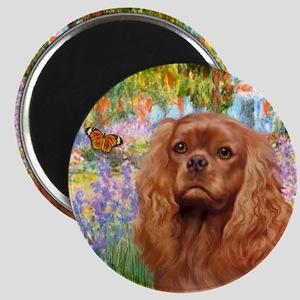 Garden / Ruby Cavalier Magnet