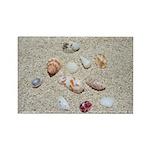 Seashelles Rectangle Magnet