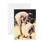 Sun In The Meadow Greeting Cards (Pk of 20)