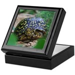 Box Turtle Keepsake Box
