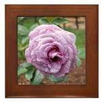 Pink Museum Rose Framed Tile