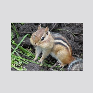 Cheeky Chipmunk Rectangle Magnet