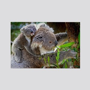 Baby Koala Bear with mom Magnets