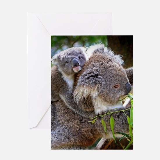 Baby Koala Bear with mom Greeting Cards
