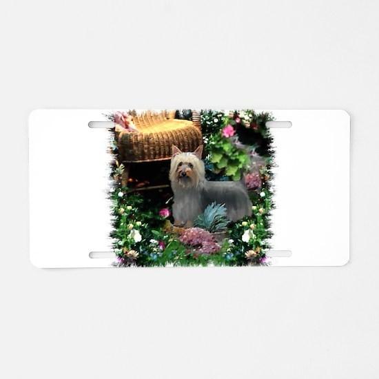 Silky Terrier Art Aluminum License Plate