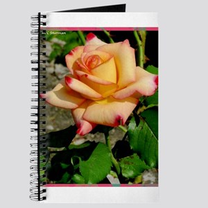 Rose, colorful, photo, Journal