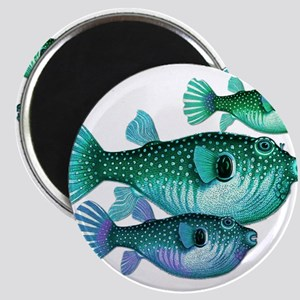 Trio of Blue Green Puffer Fish Magnets