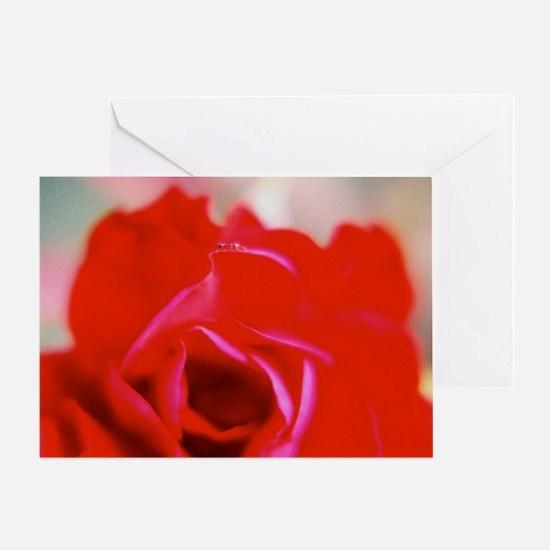 Dear Ant Rose - Greeting Card