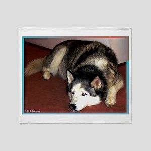 Dog, husky, photo, Throw Blanket