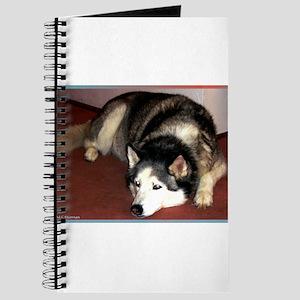 Dog, husky, photo, Journal