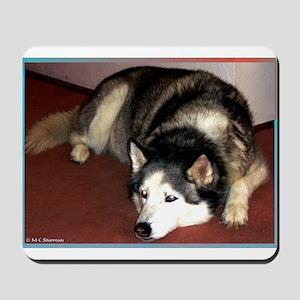 Dog, husky, photo, Mousepad
