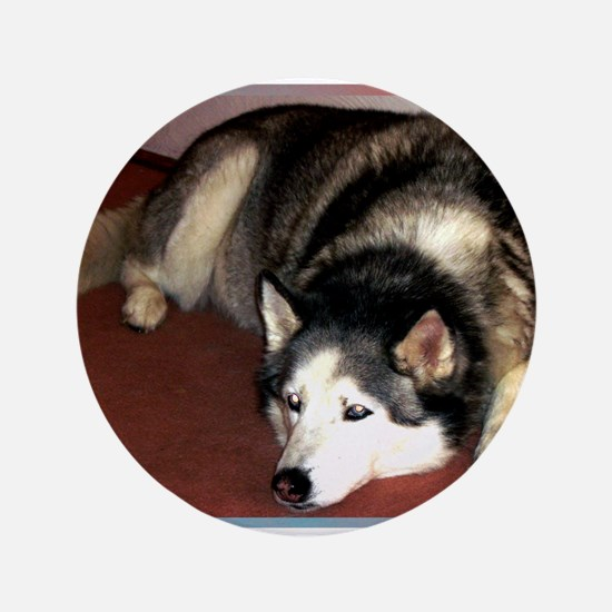 "Dog, husky, photo, 3.5"" Button"