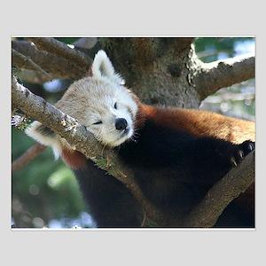 red panda napping Small Poster