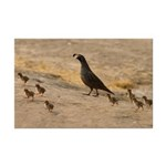 Quail Family Mini Poster Print