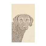 Chesapeake Bay Retriever Sticker (Rectangle 50 pk)