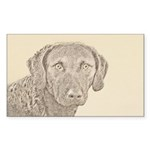 Chesapeake Bay Retriever Sticker (Rectangle 10 pk)