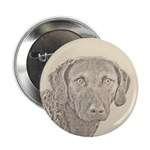 Chesapeake Bay Retriever 2.25