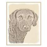 Chesapeake Bay Retriever Small Poster