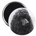 Black or Chocolate Poodle 2.25