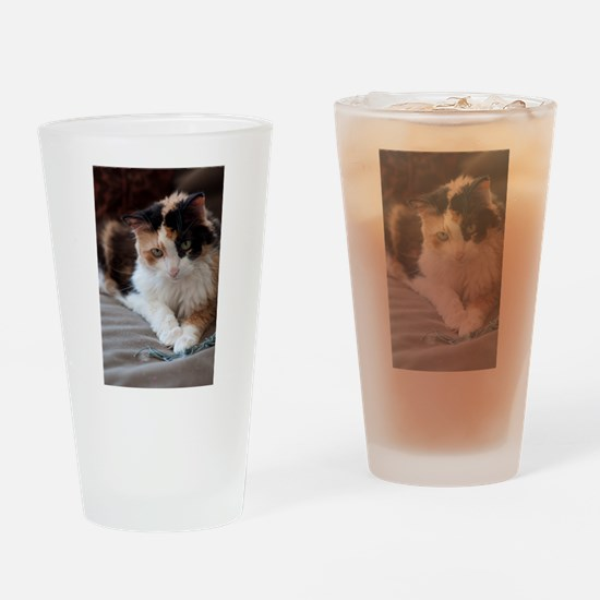 Calico Kitty Pint Glass