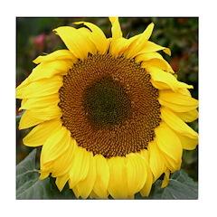 Sunflower - Tile Coaster