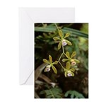 Florida Butterfly Orchid Greeting Cards (pk Of 20)