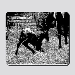 AFTM Foal getting up BW Mousepad