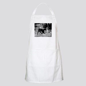 AFTM Foal getting up BW Light Apron