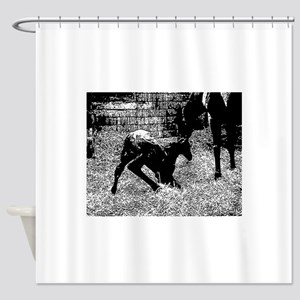 AFTM Foal getting up BW Shower Curtain