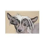 Chinese Crested (Hairl Rectangle Magnet (100 pack)