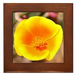 California Poppy Framed Tile