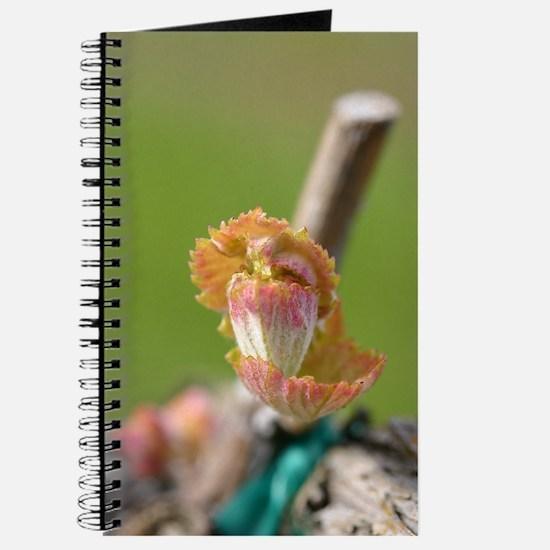 Syrah Grape Leaf Bud - Journal