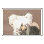 Chinese Crested (Hairless) Banner