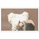 Chinese Crested (Hairless) Large Poster
