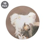 Chinese Crested (Hairless) 3.5