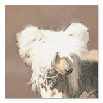 Chinese Crested (Hairles Square Car Magnet 3