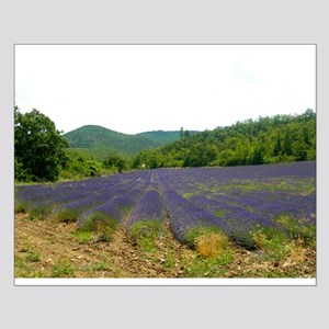Lavender Fields Small Poster