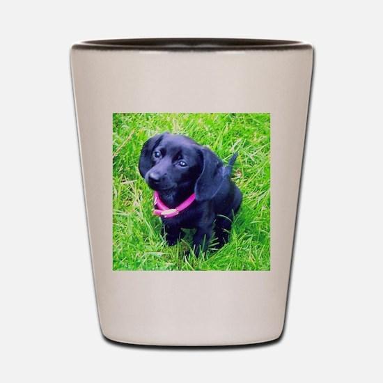 Black Puppy Shot Glass