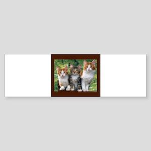 3 Cats Sticker (Bumper)