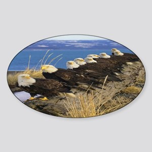 Amazing Bald Eagles Sticker (Oval)
