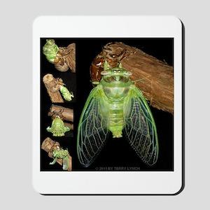 Metamorphosis of Cicadas Mousepad