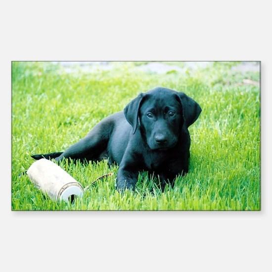 Black Lab Puppy Sticker (Rectangle)