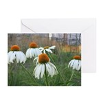 Chicago Flowers Greeting Cards (Pk of 10)